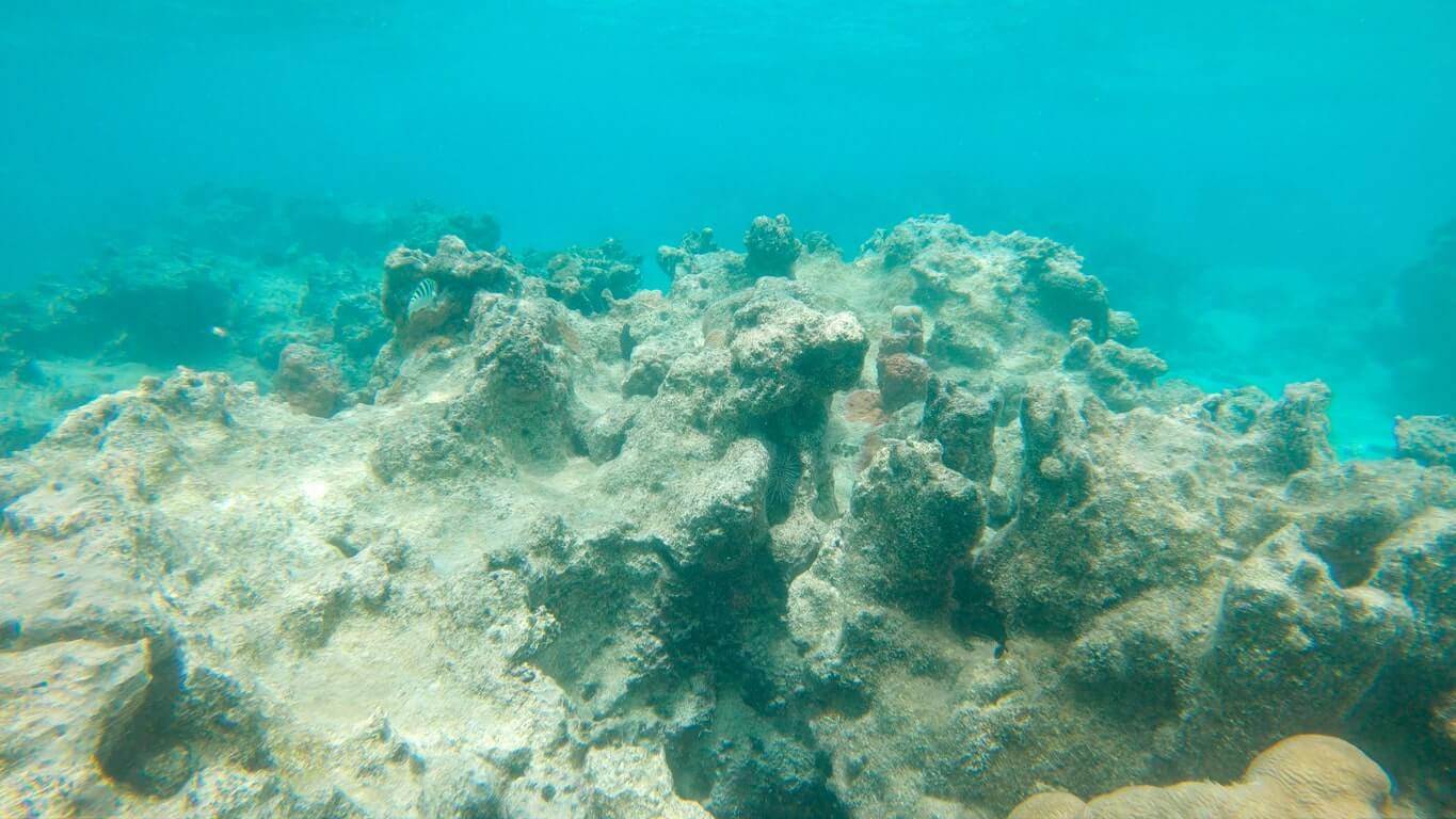A dead coral reef