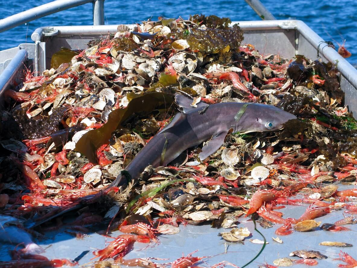 Large variation of fish caught in one net. One of the worst effects of overfishing