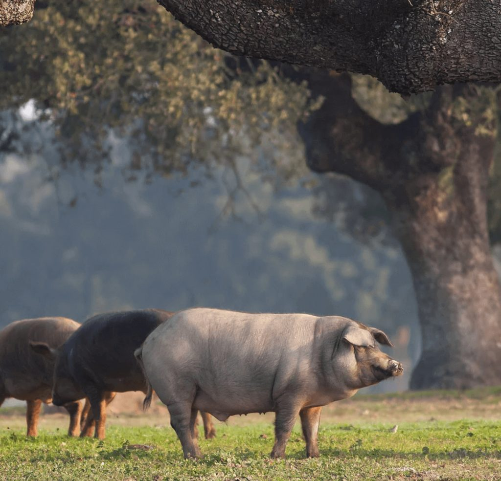 8 Veteran-owned Farms & Ranches in Texas