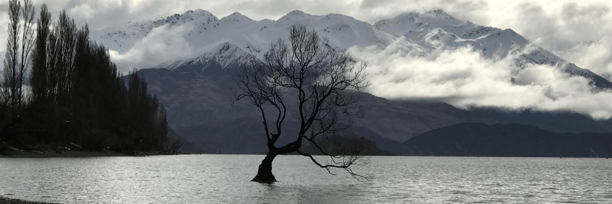 resilient tree in storm