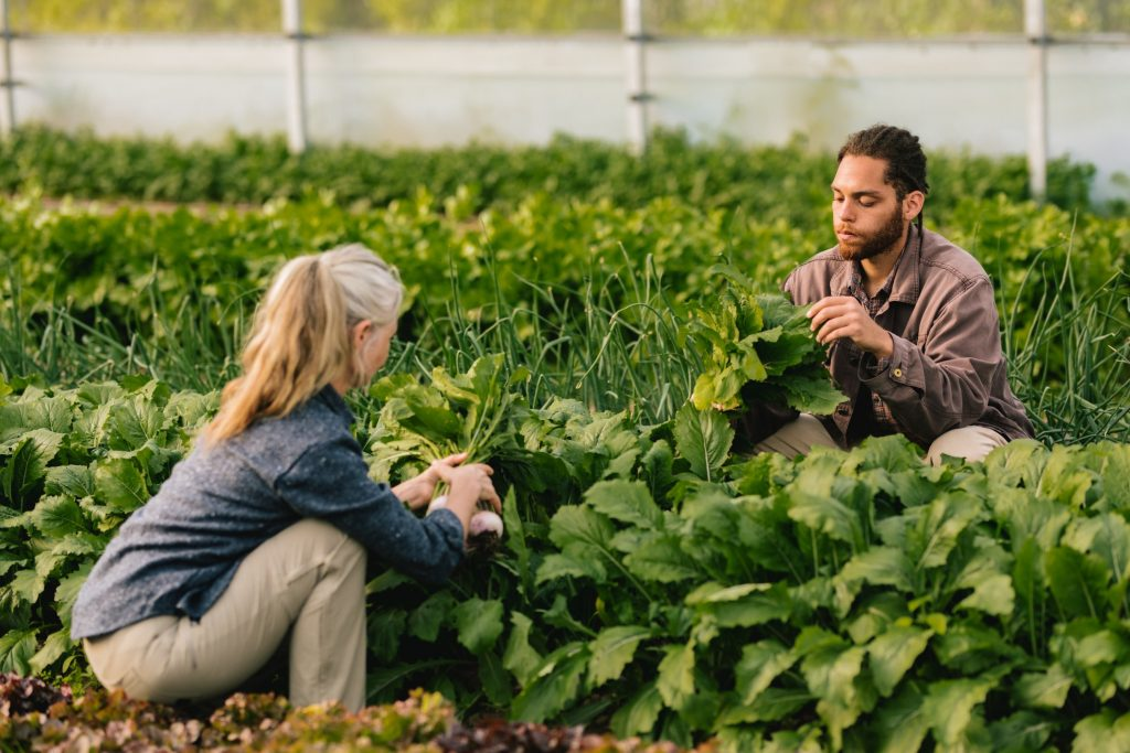 learning-about-food-production