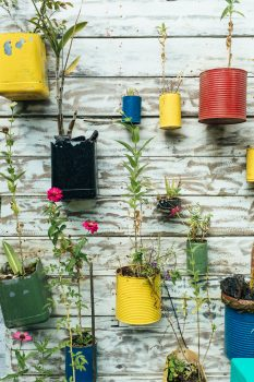upcycled jars with plants