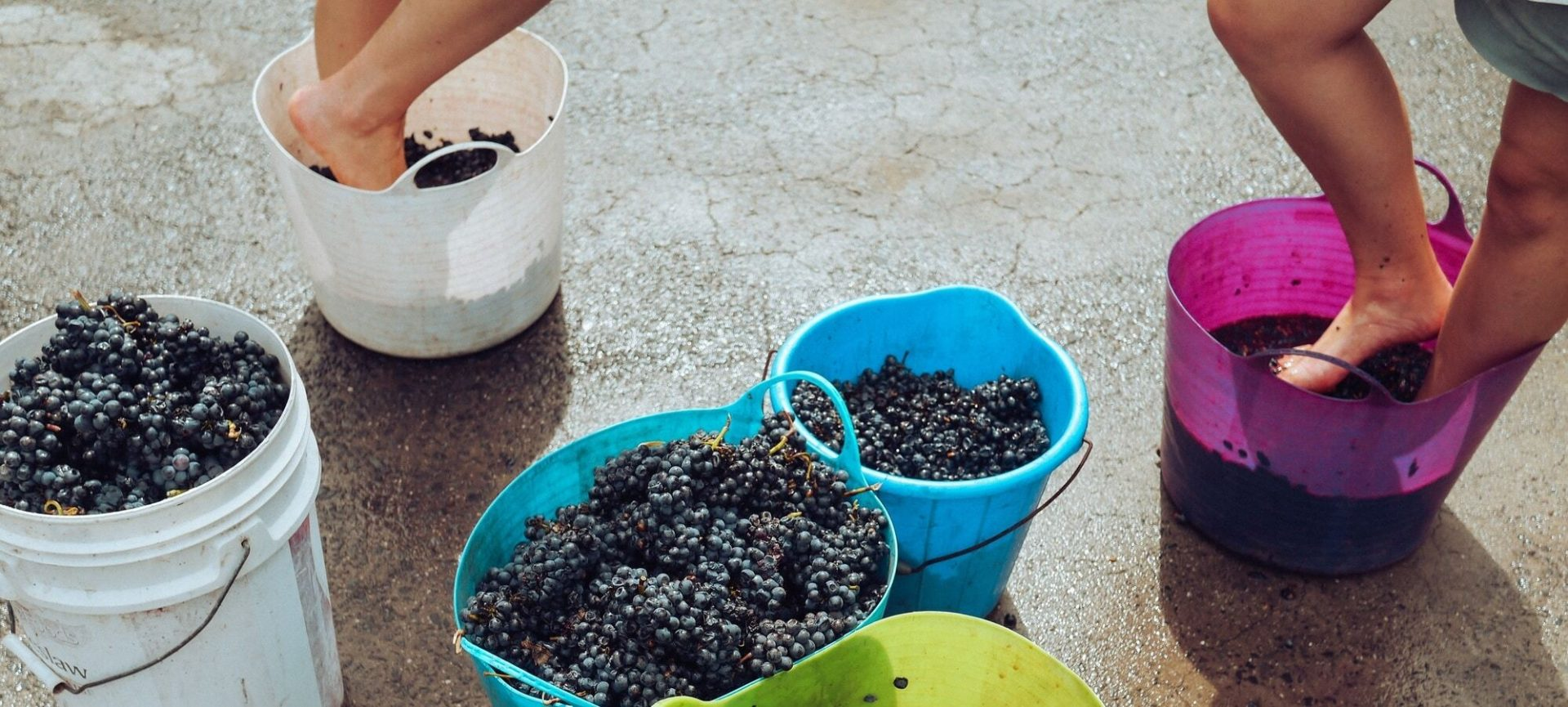 Grape Stomping Events in Texas